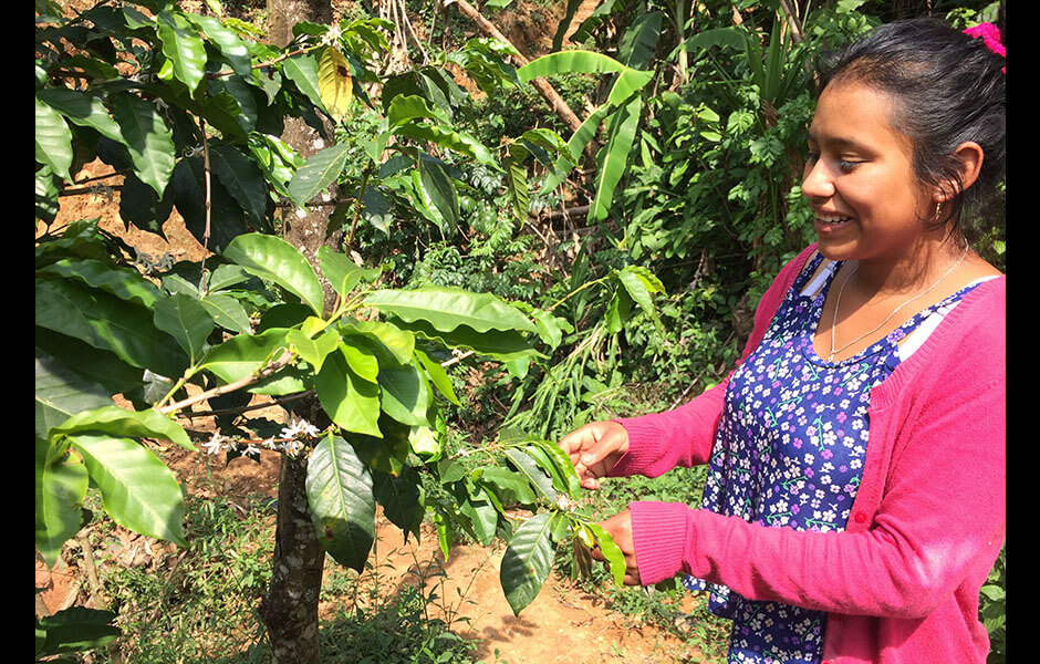 Santa Rita Coffee Producer