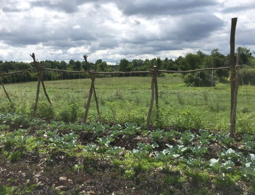 Reflections from the 2017 AgroEcology Shortcourse
